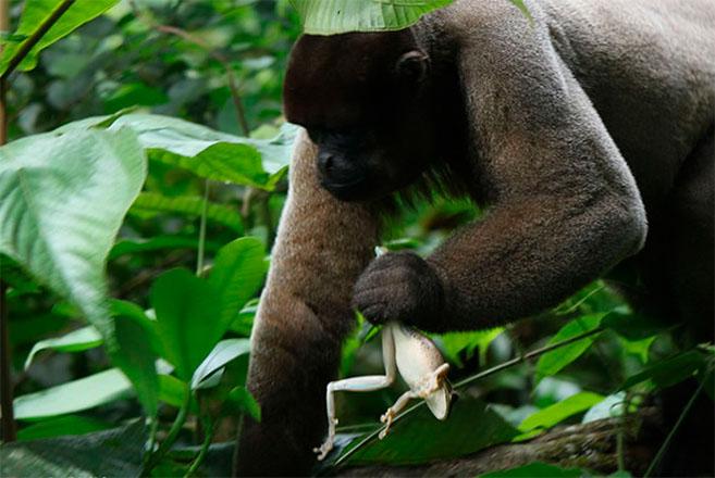 Laboratorio de Ecología de Bosques Tropicales y Primatología - Uniandes